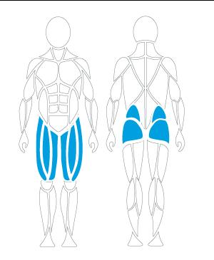 Leg press muscles